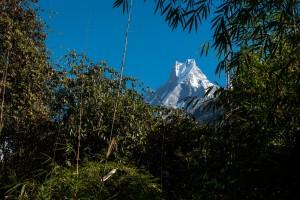 Jungle près des Annapurnas