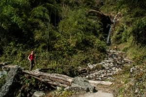Forêt dans le sanctuaire des annapurnas