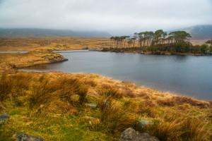 l'îlot de Derryclare Lough