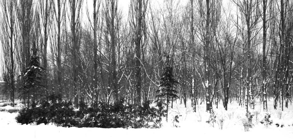 Un parc recouvert de neige