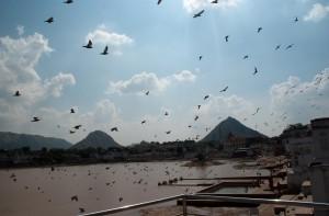 Les ghats de Pushkar