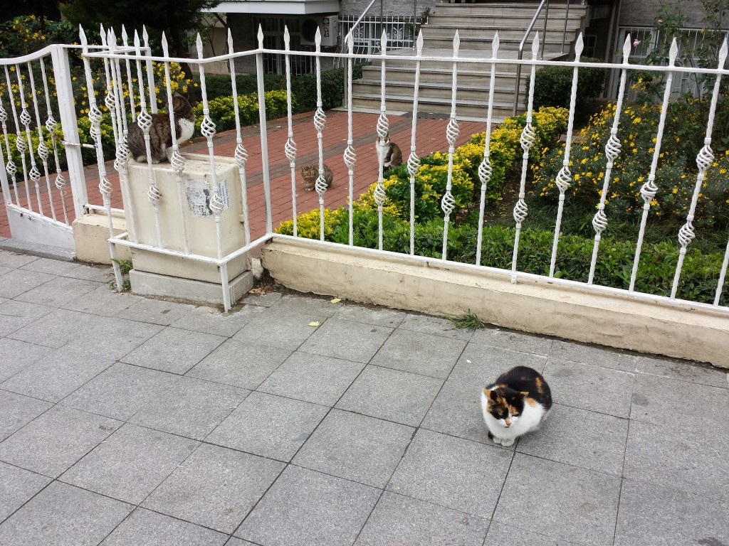 chat-istanbul