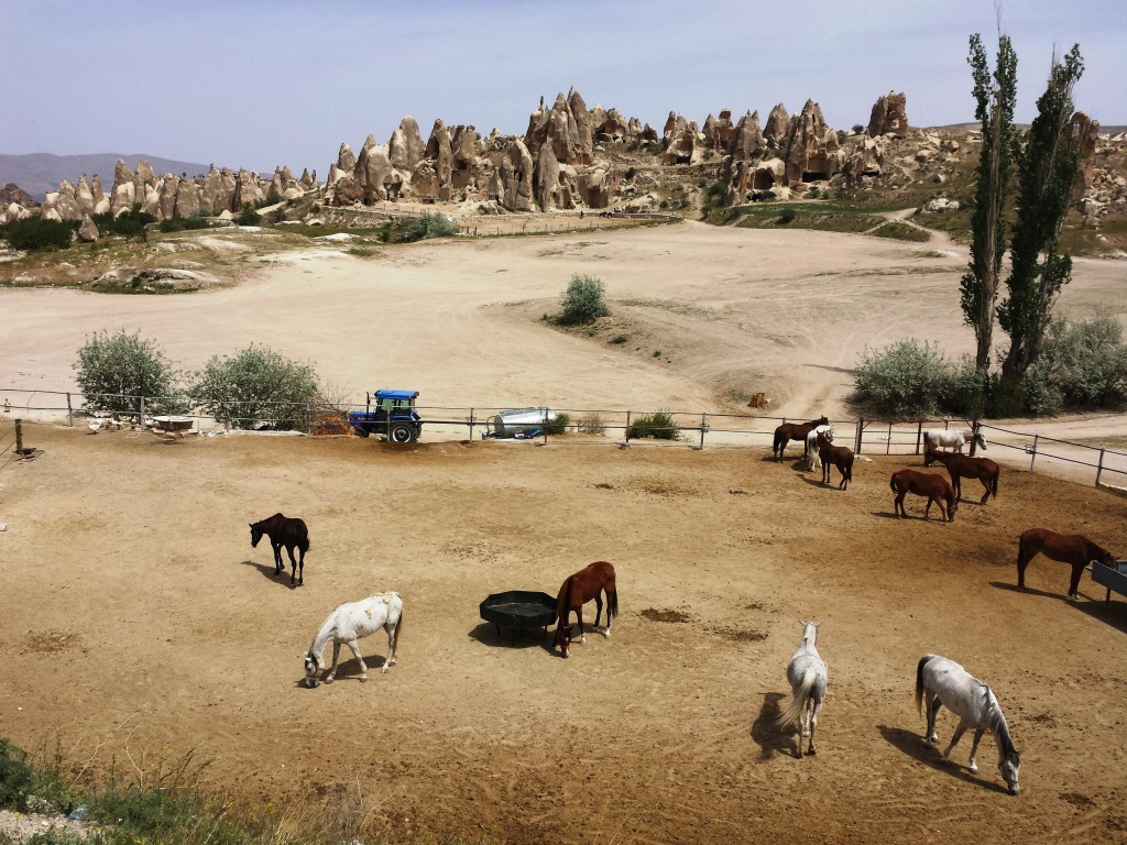 chevaux-cappadoce