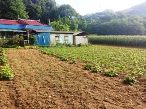 Zone rurale volontariat en Corée du Sud