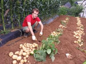 Volontarait agricole en Corée
