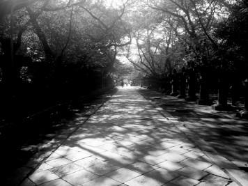 Il y a de nombreux parcs à Tokyo