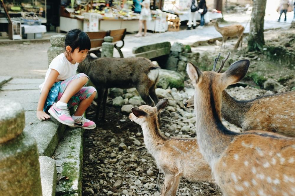 les biches de Nara