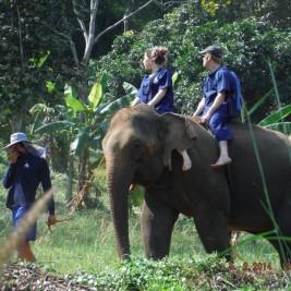 Eléphant en Thailande