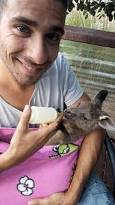HelpX en Australie avec les kangourous