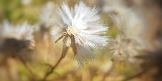 fleur dans le deser