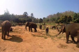 Parc pour éléphants Thaïlande