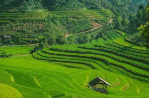 Rizières en terrasse Vietnam