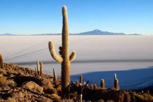 Desert en bolivie