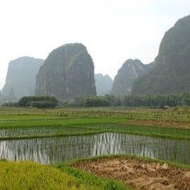 rizieres de yangshuo